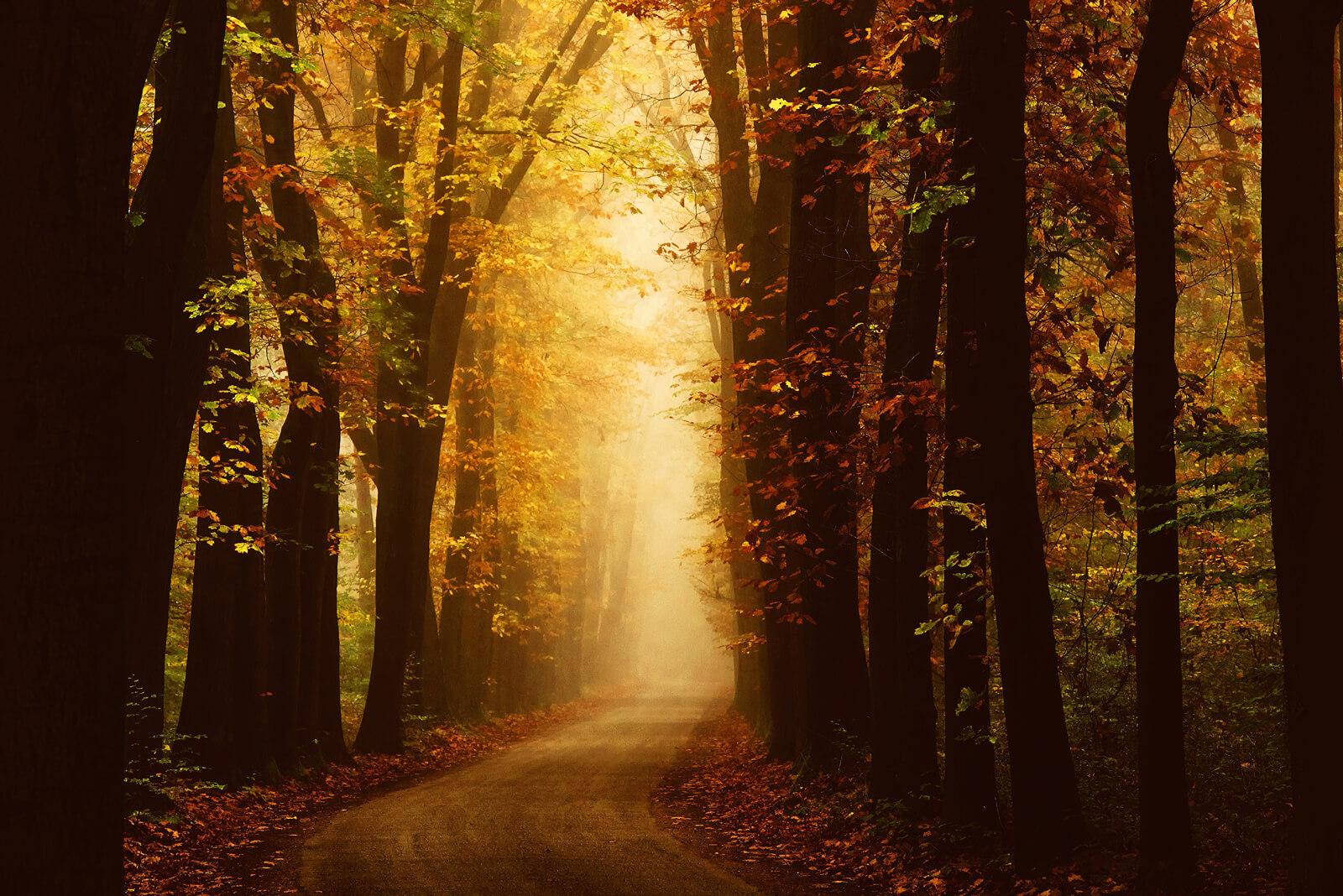 Fall in Velhorst