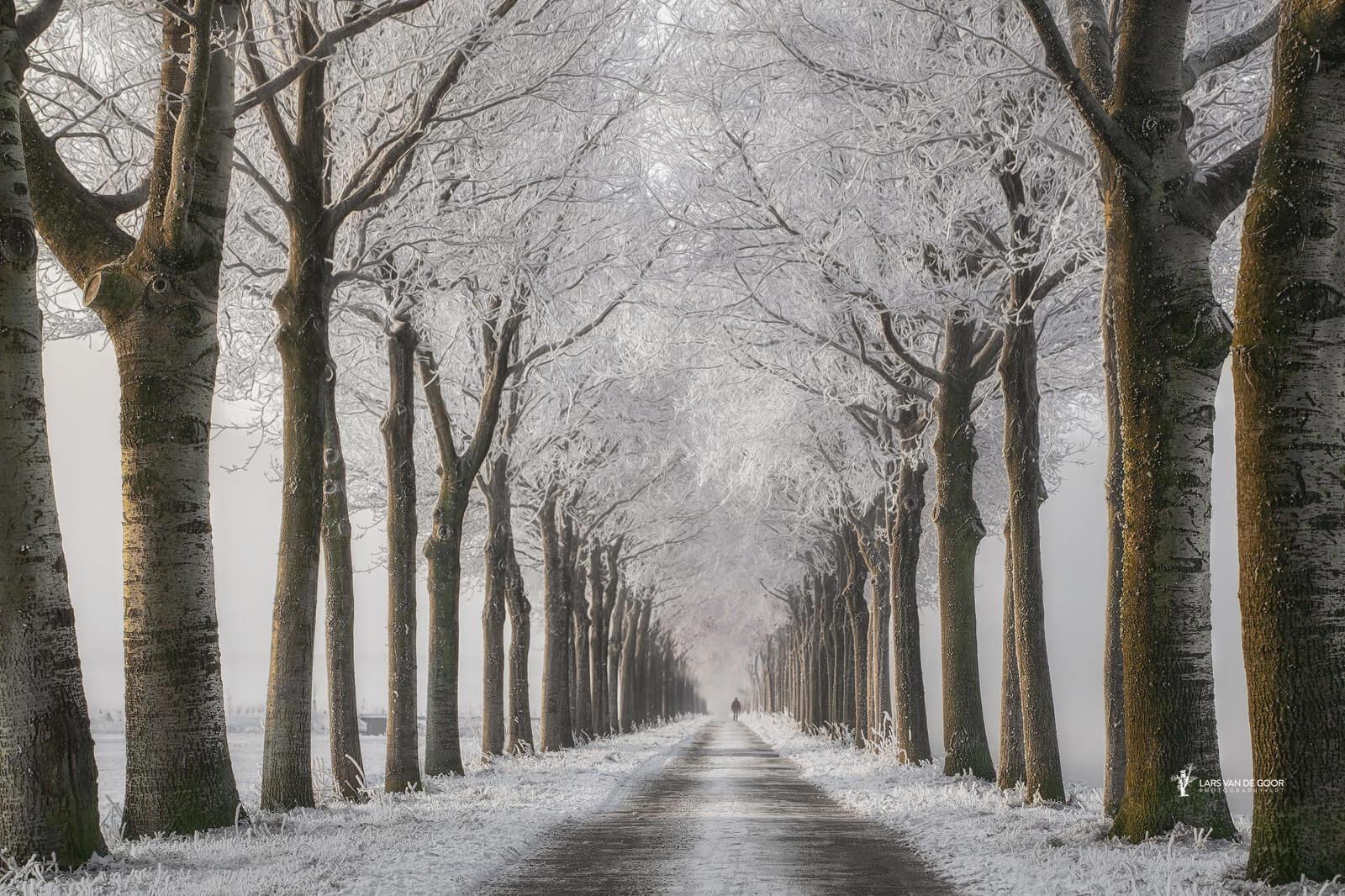 Winter Steps