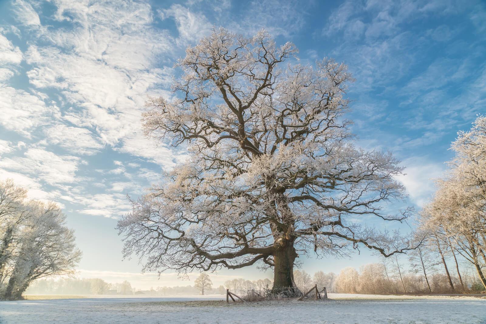 Winter King II