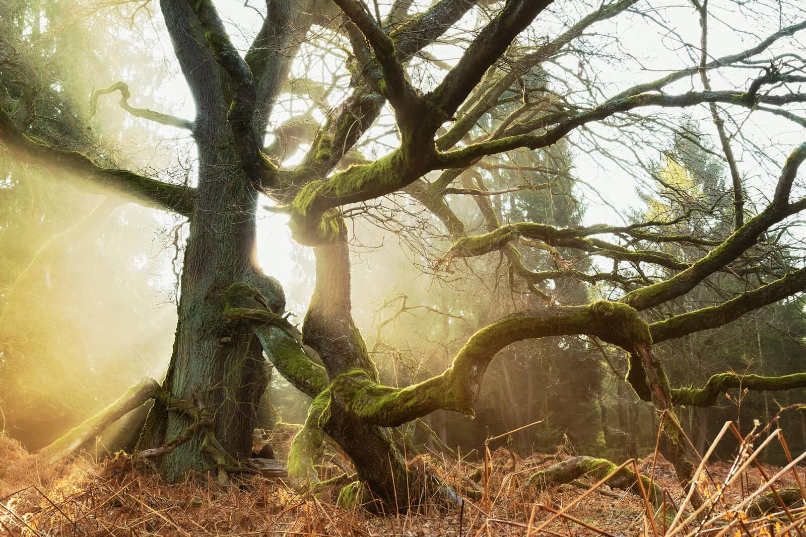 Faun Forest III
