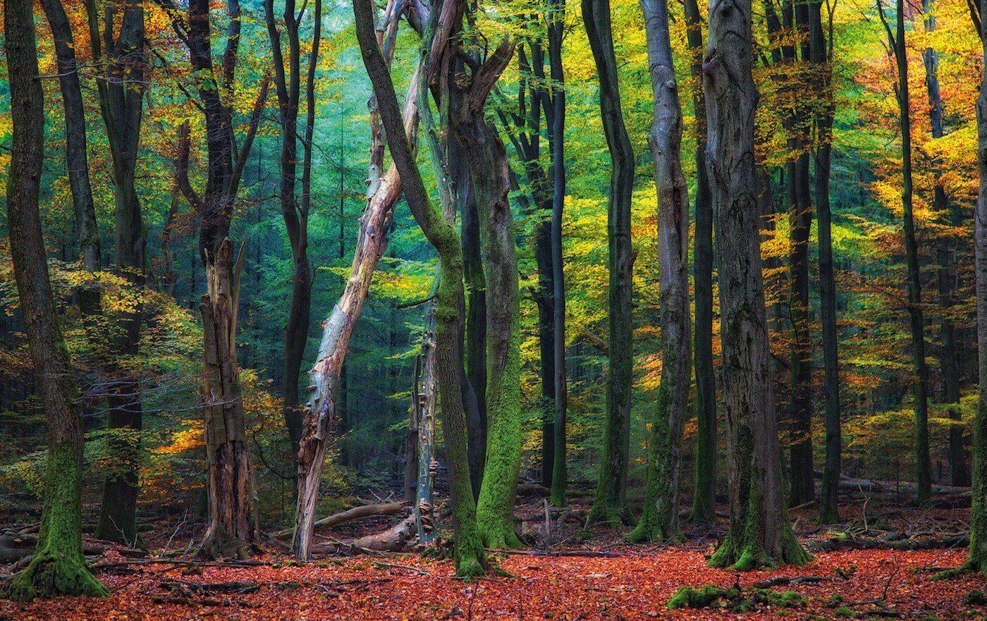 Speulder Forest op aluminium van €275 voor €99 VERKOCHT