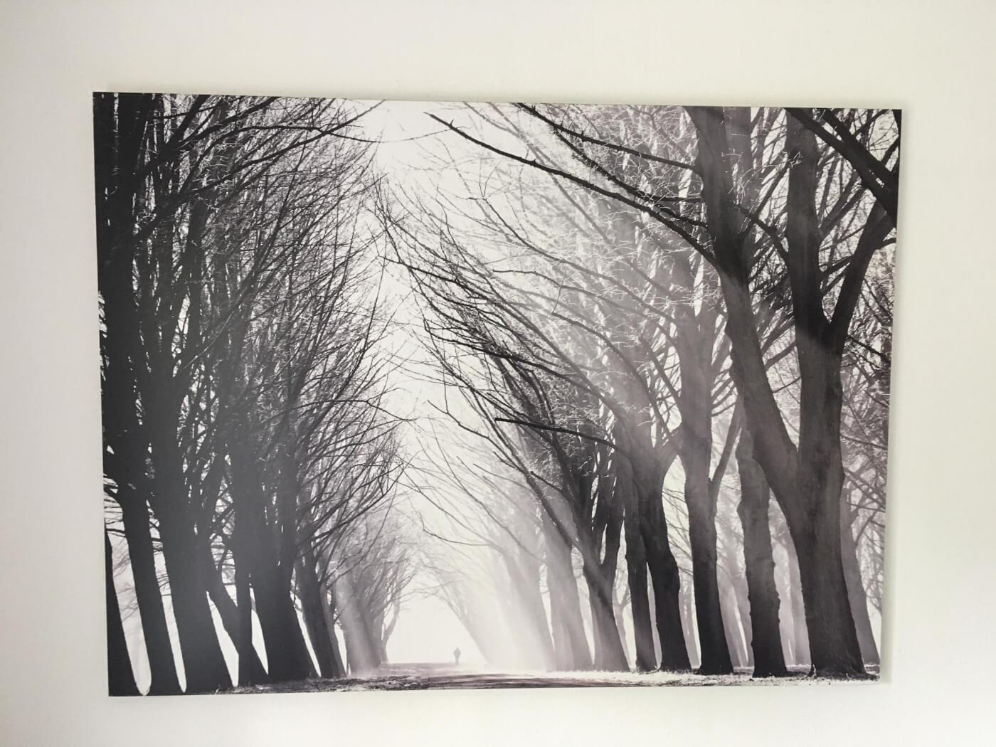Winter's Grace foto op dibond van € 318 voor € 79