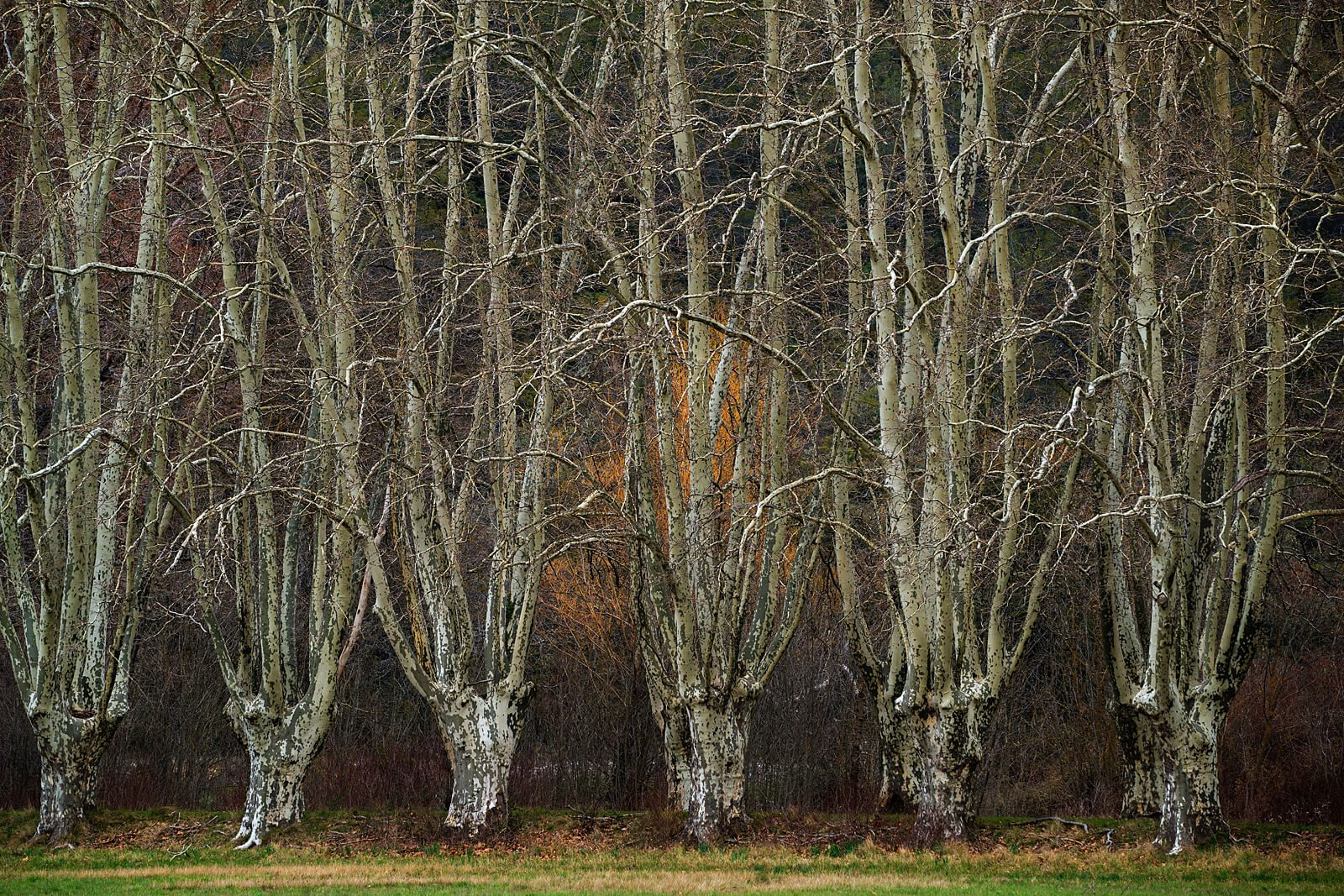 Hidden Woods III