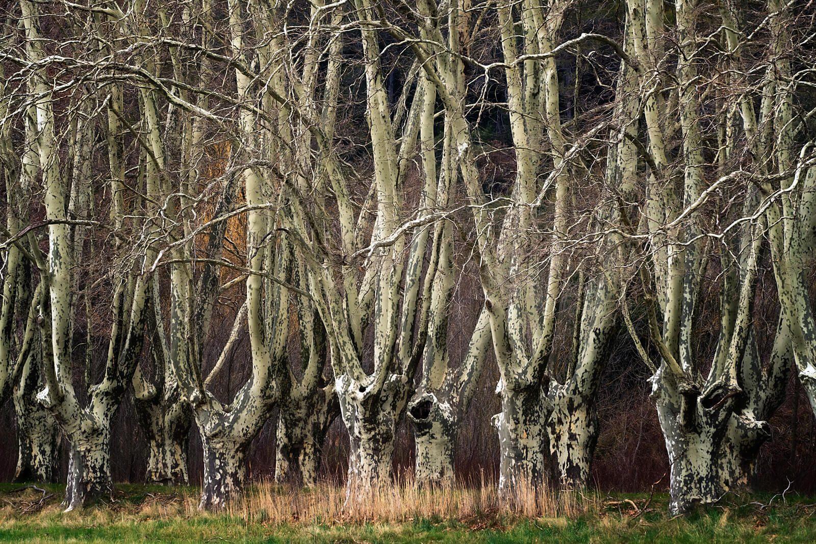 Hidden Woods IV
