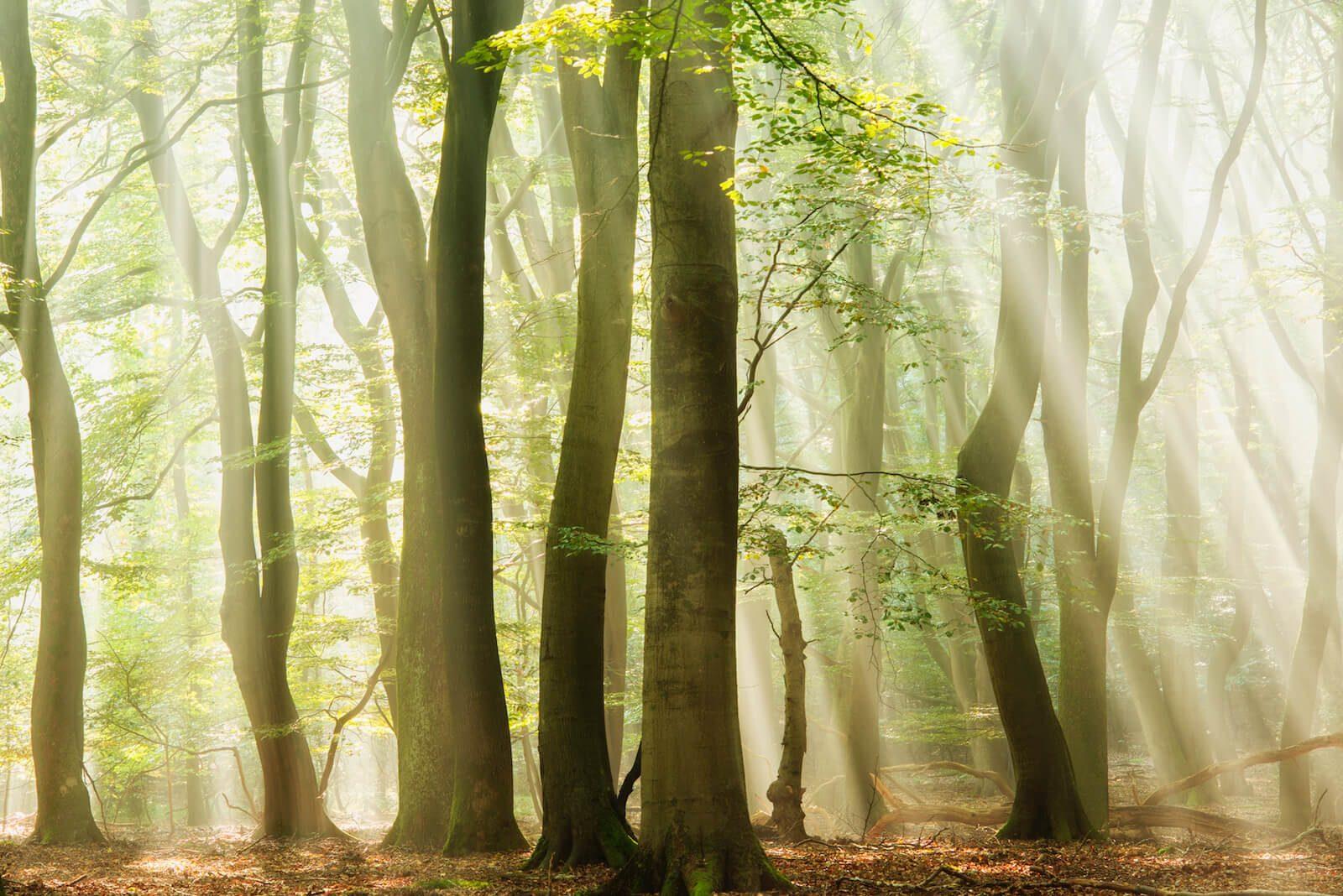 Light Forest Light