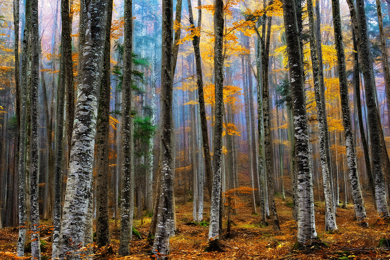 We are All Different in the Same Forest