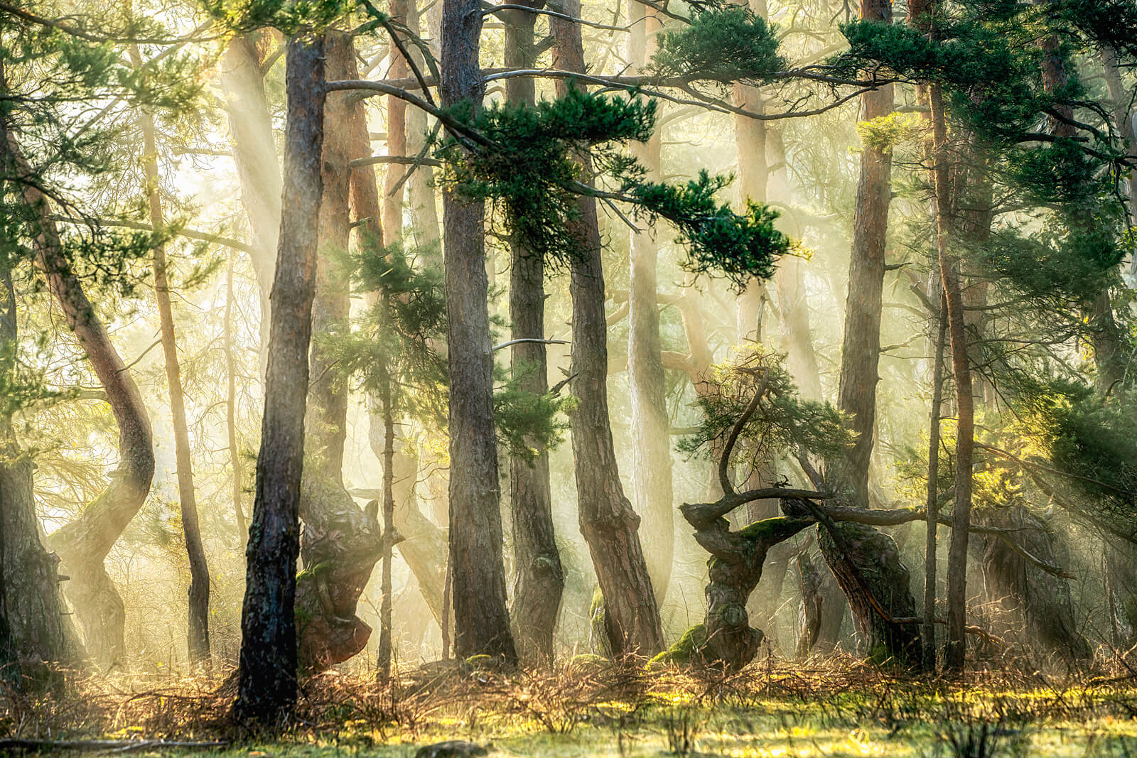 Forest Conversations