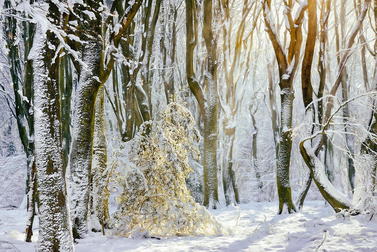 Winter Queen's Gown