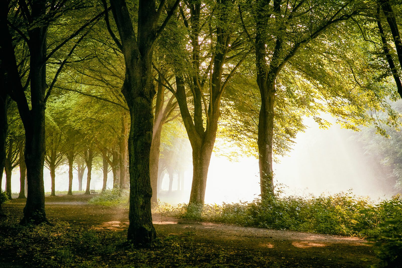 Amsterdam Forest