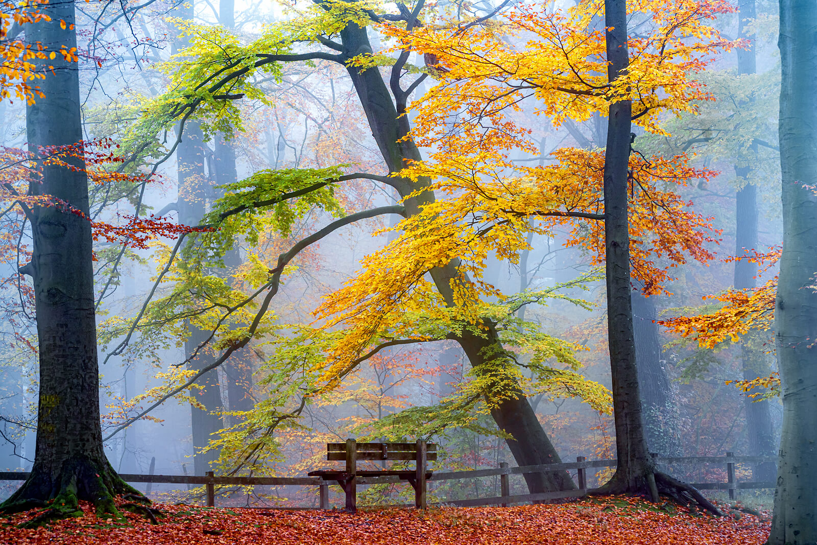 Take a Seat and Enjoy II